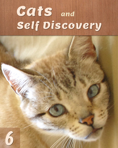 Full cats and self discovery part 6