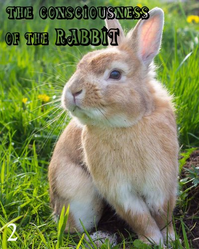 Full the consciousness of the rabbit part 2