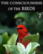 Feature thumb the consciousness of the birds part 2