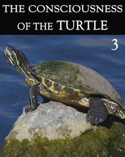 Full the consciousness of the turtle part 3