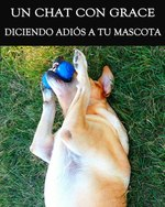 Feature thumb diciendo adios a tu mascota un chat con grace revision de vida