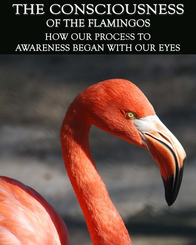Full how our process to awareness began with our eyes the consciousness of the flamingos