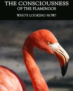 Feature thumb who s looking now the consciousness of the flamingos