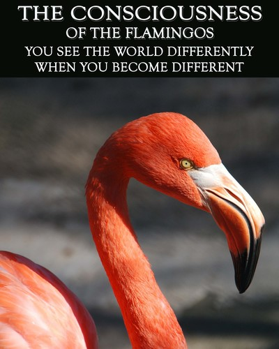 Full you see the world differently when you become different the consciousness of the flamingos
