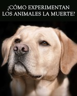 Feature thumb como experimentan los animales la muerte revision de vida animal