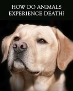 Feature thumb how do animals experience death