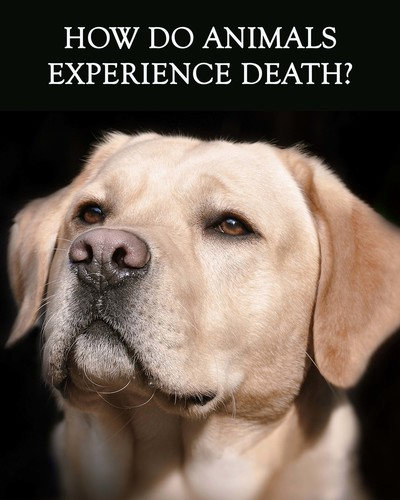 Full how do animals experience death