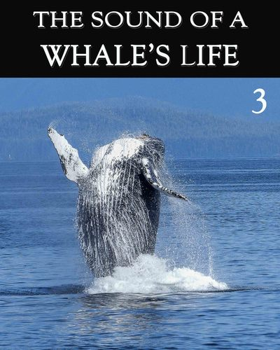 Full the sound of a whale s life part 3