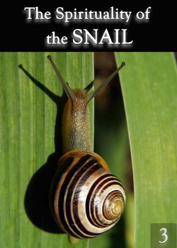 Full the spirituality of the snail part 3