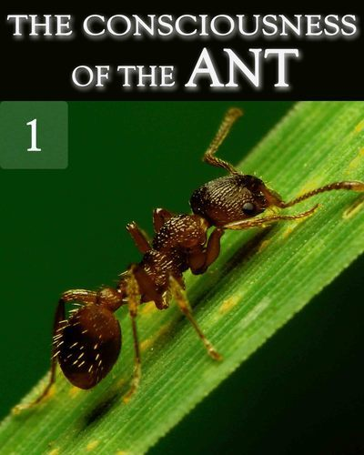 Full the consciousness of the ant part 1